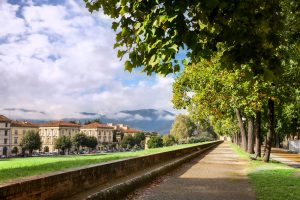 Lucca - big trees on the promenade atop the ancient wall